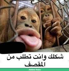 ميمز ١تجميع صور مضحكه غمزه Amino