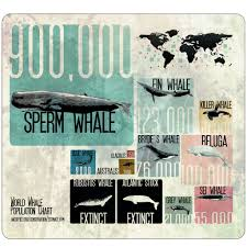 World Whale Population Chart A Brand New Chart That I Made