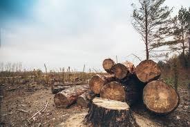 causes of environmental degradation lovetoknow deforestation disturbs animal habitats