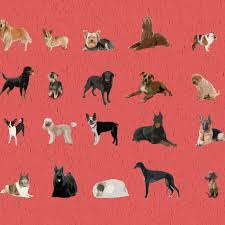 Americas Top Dog How The Most Popular Breeds Have Changed