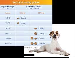 Easy Dosing Smart Design Previcox Project Merial