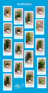 If you want to know, which plant is the best for you: Please back our AIRY  book and you will receive all necessary information.