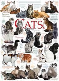 Cat Quotes Beauteous Cat Quotes 48 Piece Puzzle By Cobble Hill