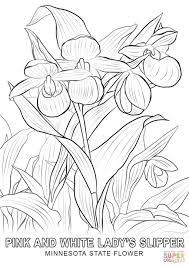 Small Picture Minnesota State Flower coloring page Free Printable Coloring Pages