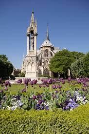 ecclesiastical purple tulips and