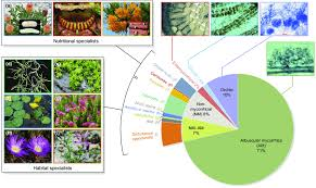 Plant Chart Pie Chart Showing The Taxonomic Diversity Of Plants With