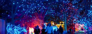 Denver Zoo Holiday Lights Cu Night At Zoo Lights University Of Colorado Boulder