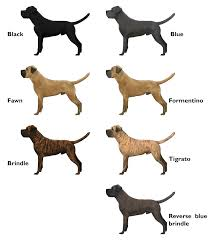 Brindle Color Chart Cane Corso Color Variety Cane Corso Cane Corso Colors