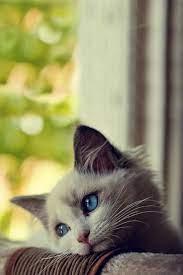 Cute Kitten Bored Android Wallpaper ...