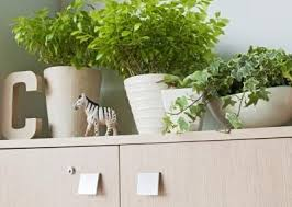 best plants for office cubicle. plants for an office cubicle and fluorescent light best e
