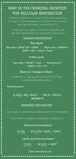 what is the chemical equation for cellular respiration infographic