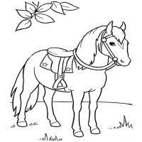 Disegni Da Colorare Cavalli Da Corsa Disegni Di Cavalli Da Colorare