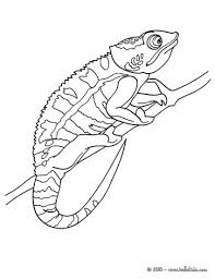 Small Picture REPTILE coloring pages 54 free REPTILES coloring pages online