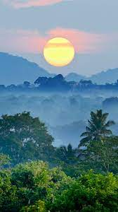 Jungle Sunset Wallpaper - KoLPaPer ...
