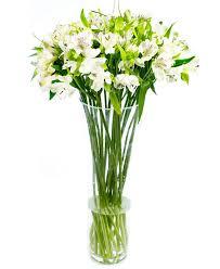 white alstroemeria peruvian lily