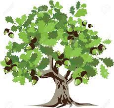 Big green oak tree illustration | Oak tree drawings, Tree illustration, Big  tree drawing