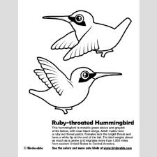 Small Picture Ruby throated Hummingbird Coloring Page Fun Free Downloads