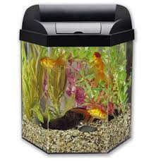 office fish. 4 Reasons To Put An Aquarium In Your Office Fish