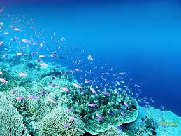 college essays college application essays life under water essay utopia dystopia essays score reno org marine life underwater