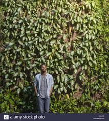 Living Wall Of Green Plants In Christchurch Airport New Zealand Wall Climbing Plants Nz