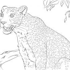Leopard Colouring Pictures With Cute Leopard Coloring Page Free