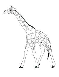 Giraffe Coloring Pages Printable Campzablaceinfo