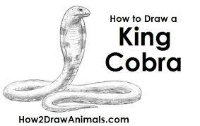 snake head drawings in pencil. Delighful Drawings Draw King Cobra Snake To Head Drawings In Pencil N