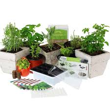 culinary indoor herb garden starter kit basic herb seeds 6 non gmo varieties grow cooking herbs spices seeds basil dill parsley chives