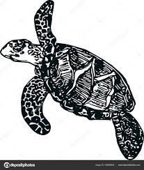 морская черепаха на белом фоне эскиз векторное изображение