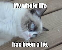 Caterville: Grumpy Cat Memes via Relatably.com