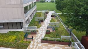 suny college of brockport s completed green roof brings designer s vision