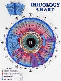 Dr Bernard Jensen Iridology Chart Iridology Tumblr