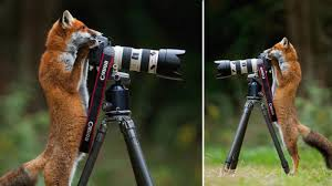 Image result for wildlife photographers animals curious about them