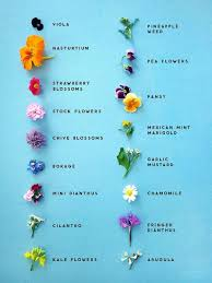 Edible Flower Varieties Garden Design Ideas