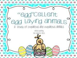 Eggcellent Egg Laying Animals Best Egg Laying Chickens