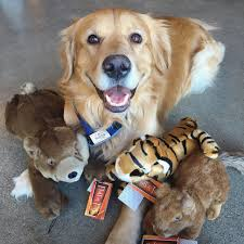 the newest plush toys at dog don t look or feel like dog toys at all fluff tuff toys are super soft and so cuddly that our kiddo customers want to