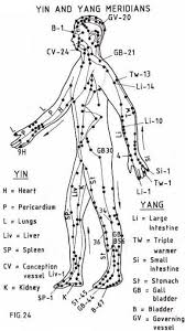 The Meridians Concepts Of The Traditional Chinese Medicine