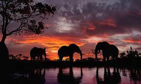 Elephants at Sunset Wallpaper Mural ...