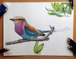 Drawingcolor 90 Best Color Pencils Images On Pinterest Drawings Drawing And