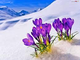 Bildergebnis für wiosna