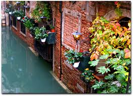 venice italy plants color colour water canon garden geotagged c europe flickr pottedplants canonphotography outdoorphotography mickspics