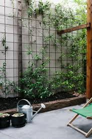 Reo mesh used for climbing plants. Pinned to Garden Design - Walls, Fences &