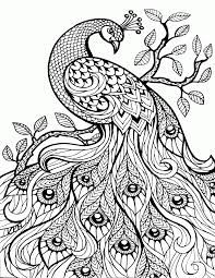Small Picture Special Peacock Coloring Pages For Adults 76 7435