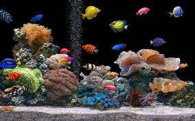 50+] Free 3D Aquarium Wallpaper on ...