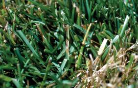 Turf Disease What Does Grass Fungus Disease Look Like Tips And Tricks For A