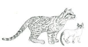 ocelot size ocelot and cat by zeldia on deviantart
