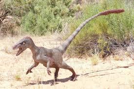 500+ vectors, stock photos & psd files. What Is A Raptor Dinosaur Fossilera Com