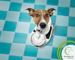 Heeft je hond artrose?