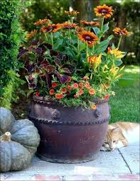 container planting ideas plant container ideas gardening planner container planting ideas nz