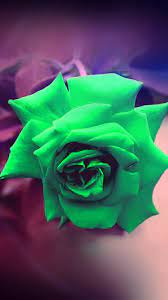 my90-green-rose-nature-flower-wood-love ...
